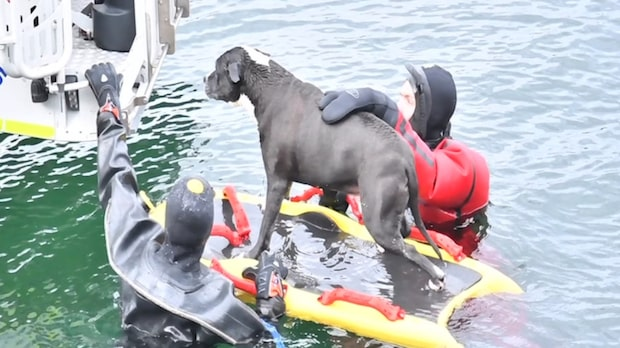 Hunden Vegas föll i vattnet – här räddas han