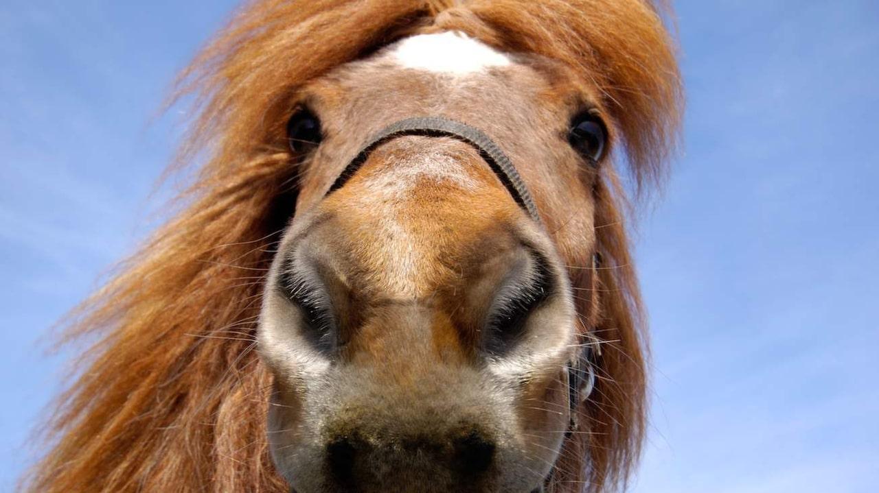 hästschampo längre hår