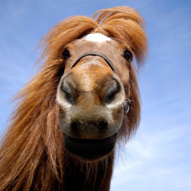 hästschampo till människor