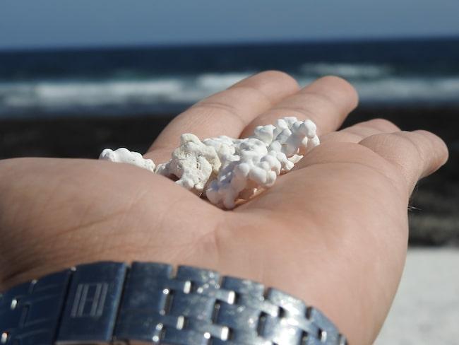 Många vill fota de vita korallerna som liknar popcorn.