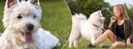 Forskare: Snart kommer du att kunna förstå din hund