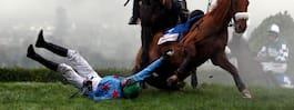 Fyra hästar döda – efter tävlingen: