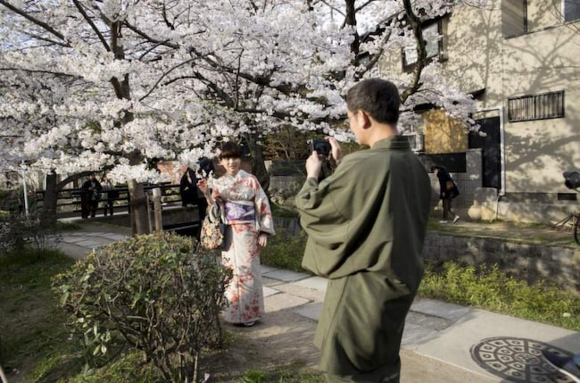 <strong>Klick. </strong>Fotograferingsstund längs Filosofernas stig i Kyoto, ett populärt område att njuta av körsbärsblomningen. Många klär upp sig för tillfället. Foto: Per Liljas. <span></span>