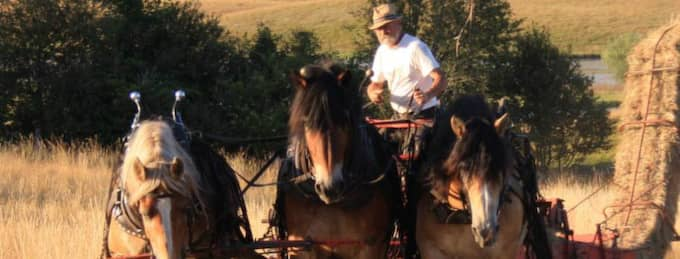 """Vill hjälpa. Med hjälp av arbetshästar driver Jenny och Lars-Göran Göransson sitt ekologiska lantbruk på gården i skånska Andrarum och förra året nominerades gården till Skånes Miljöpris. Förlusten av hästarna som avled vid blixtnedslaget är förstås enorm, både ekonomiskt och emotionellt. """"Därför vill jag hjälpa dem, jag vet ju hur hårt detta slår mot dem"""", säger Cajsa Stålhammar. Foto: Privat"""