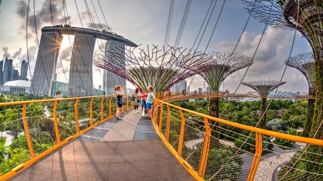 Tolv gigantiska och konstgjorda träd förbinds av en promenadväg 22 meter ovan mark i Marina Bay. Skapelsen heter Supertree Grove.