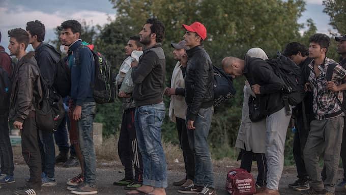 Lagrådet sågar regeringens förslag om uppehållstillstånd för ensamkommande som studerar. Bild från Ungern i september 2015. Foto: EXPRESSEN / CHRISTOFFER HJALMARSSON EXPRESSEN