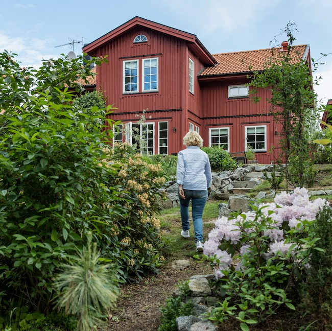 Slänten ner från Kajsa och Staffans hus i Enköping, är införlivad i skogen som ett woodland. Här trivs bland annat Rhododendron.