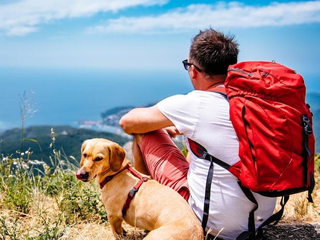 Företaget söker en person som ska resa och fotografera hundar.