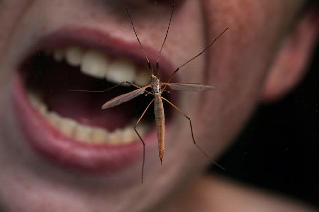 Du har ätit insekter utan att veta om det.