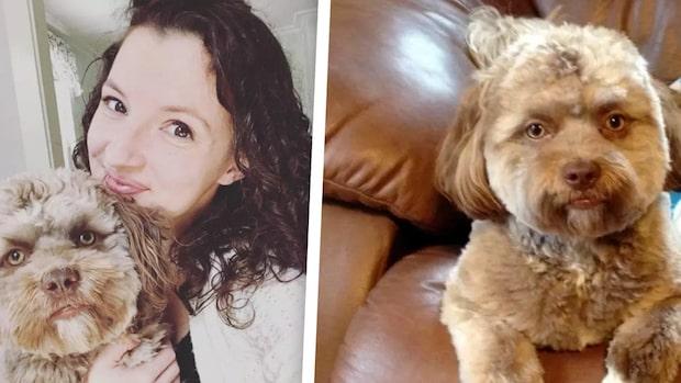 Möt hunden som ser ut som en människa