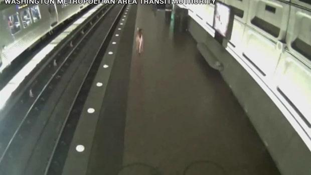 En hjort överraskade tunnelbaneresenärer