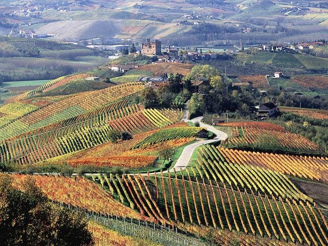 I Piemonte produceras några av världens mest angenäma viner.