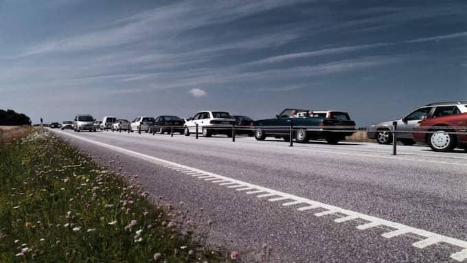 Ringlande köer på motorvägen.