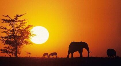 På safari i Afrika. Drömresan för många. Fantastiska upplevelser och många djur - om man har tur.