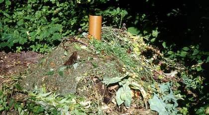 Dödssporer. Nu varnar forskare för dödliga sporer i komposten. Komposten på bilden har inget med artikeln att göra. Foto: Nina Bergström