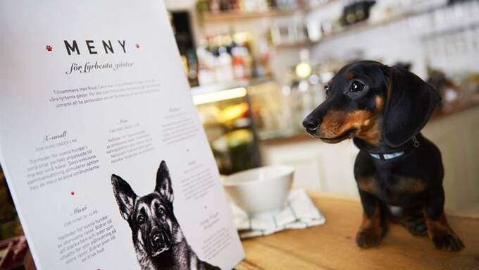 På Bee kök & bar kan även hundar välja på menyn, men beställningen sköts troligtvis av matte och husse. Foto: Pressbild