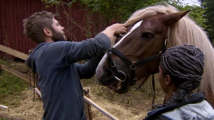 Dee Omar och Robert Lundström upptäcker att en häst stått med bett i munnen hela natten. Foto: TV4