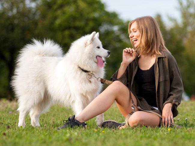 Snart kan du prata med din hund, menar en professor i USA.