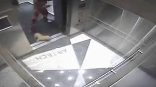 Här lämnar kvinnan och hunden hissen. Foto: Youtube