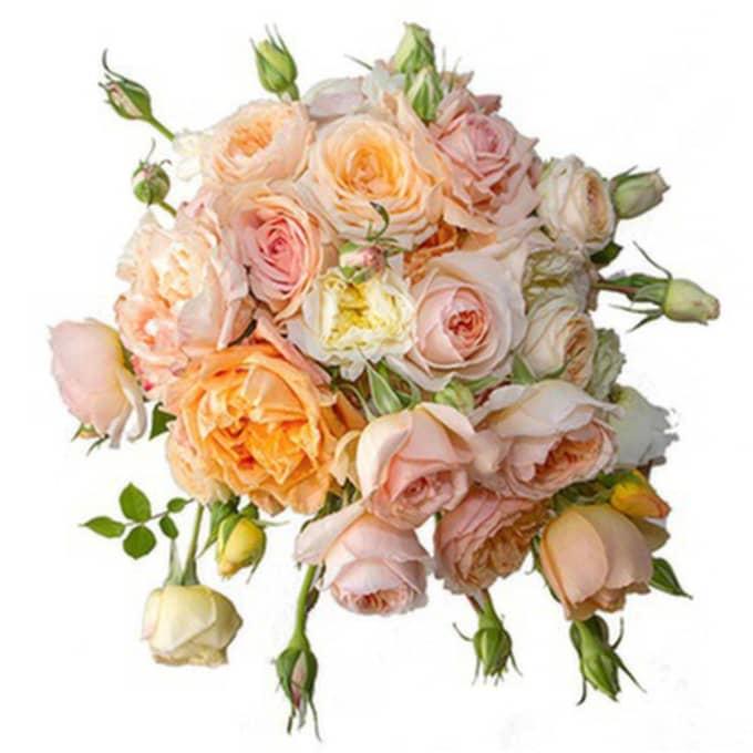 Här är en bild av Sofias brudbukett som publicerades på Kungahusets hemsida. Läs mer om buketten här. Foto: Kungahuset.se