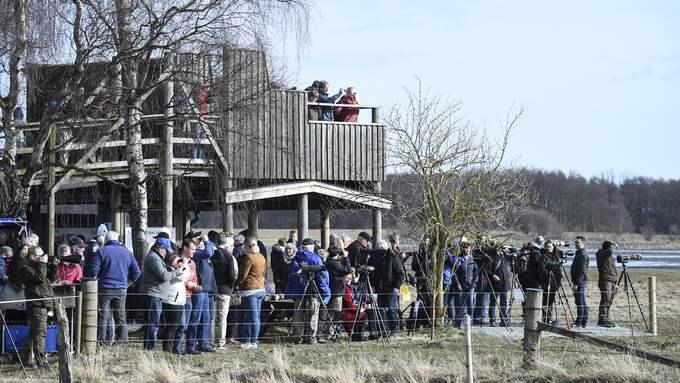 Omkring 1 000 personer besökt Tranans dag vid Pulken i Kristianstad på lördagen. Foto: JENS CHRISTIAN