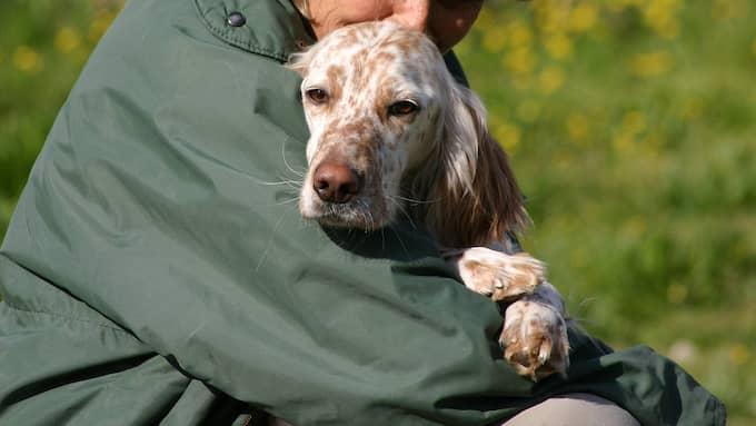 Nu får kvinnan vara hemma från jobbet – för att ta hand om sin sjuka hund. (Bilden är en genrebild.) Foto: Colourbox