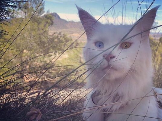 Svenske katten Cezar har besökt fler länder än många människor har gjort.