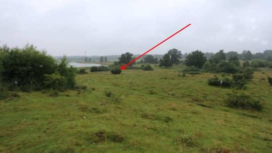 Bilden är från ett naturreservat i Hörby. Här dumpades offrets mobiltelefon och ett par skor. Mordförsöket skedde i närheten. Foto: Polisen