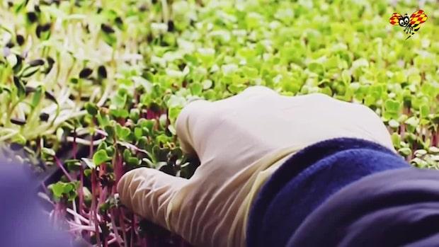 William odlar ett halvt ton grönsaker på 20 kvadrat