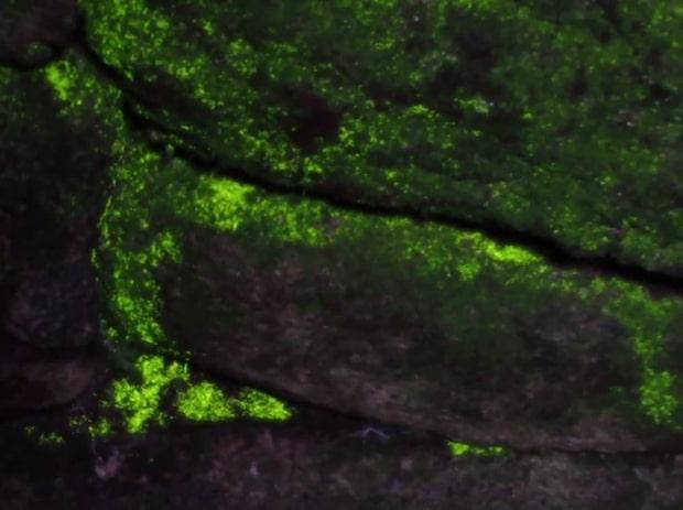 Mystiska gröna skimret slår världen med häpnad