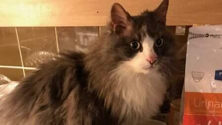 Katten Adolf försvann från hemmet för sex år sedan. Efter ett inlägg på Facebook återförenades han med sin matte Denice Vall. Foto: PRIVAT