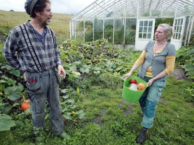 """Det populära programmet """"Mandelmanns gård"""" får en till säsong – men det finns en baksida. Foto: Lasse Svensson"""