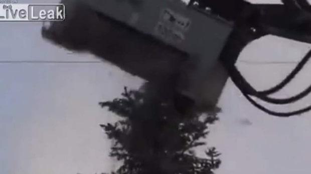 Maskinen förintar trädet - på sekunder
