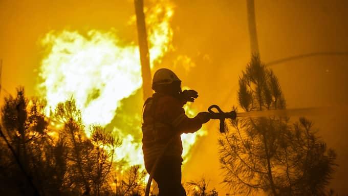 Storbranden i Portugal har hittill krävt 62 människoliv. Foto: PAULO NOVAIS / EPA / TT / EPA TT NYHETSBYRÅN