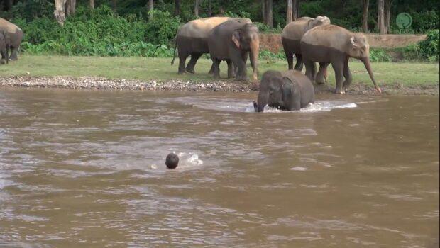 Elefantens underbara ingripande för mannen