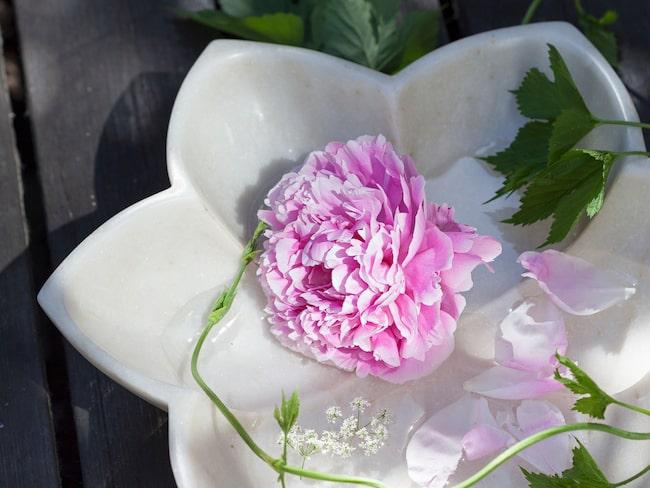 Fågelbad Lotusblomma, 2 995 kronor, Soulosofie.