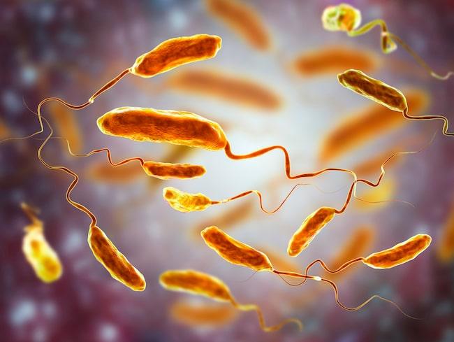 Kolera i närbild. I verkligheten får man lösa diarréer och magsmärtor. Ett barn kan bli uttorkat på ett dygn.