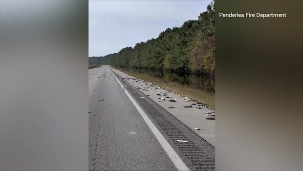 Hundratals döda fiskar på motorvägen efter orkanen Florence