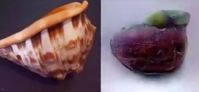 Den artificiella intelligensen översätter hjärnvågorna till bilden till höger när testpersonen tittar på en snäcka. Foto: Youtube