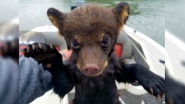 Fiskare räddade björnunge på floden