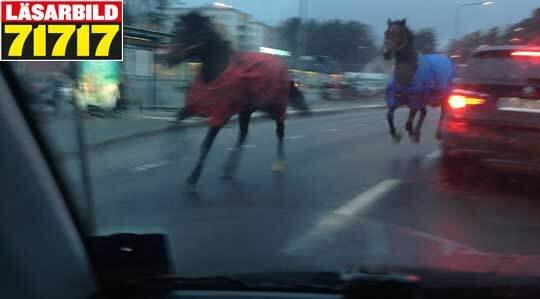 Bildresultat för hästar på vägen