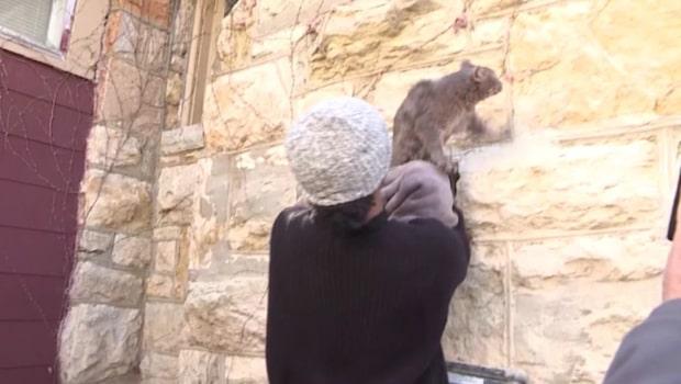 Här räddas katten efter fem dagar i skorsten