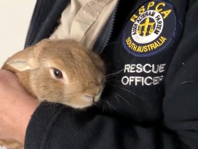 Kanin fick bombteam att rycka ut i Australien.