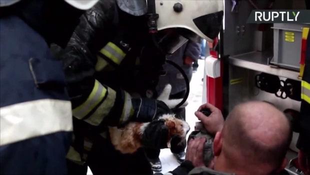 Livlös katt återupplivas av brandmän