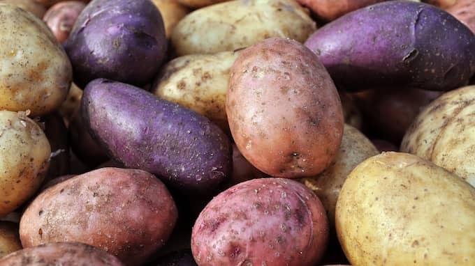 Potatisar ska eventuellt kunna omvandlas till återvinningsbar plast. Foto: SHUTTERSTOCK