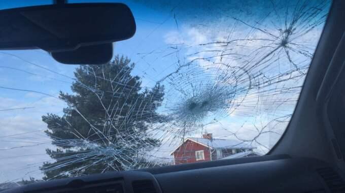 Efter att Mattias Heed sköt vargen har hans bil vandaliserats. Foto: PRIVAT