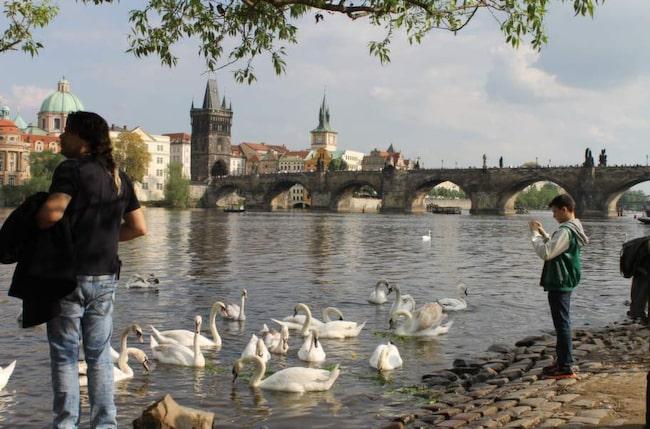 10 klassiker i broarnas skona stad