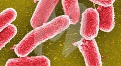 bakterie i magen efter utlandsresa