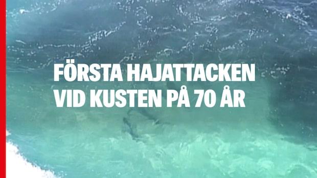 Första hajattacken vid kusten på 70 år