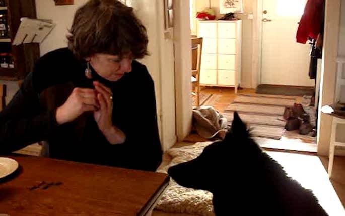 """Hör när vallhunden Enso säger """"mamma"""""""